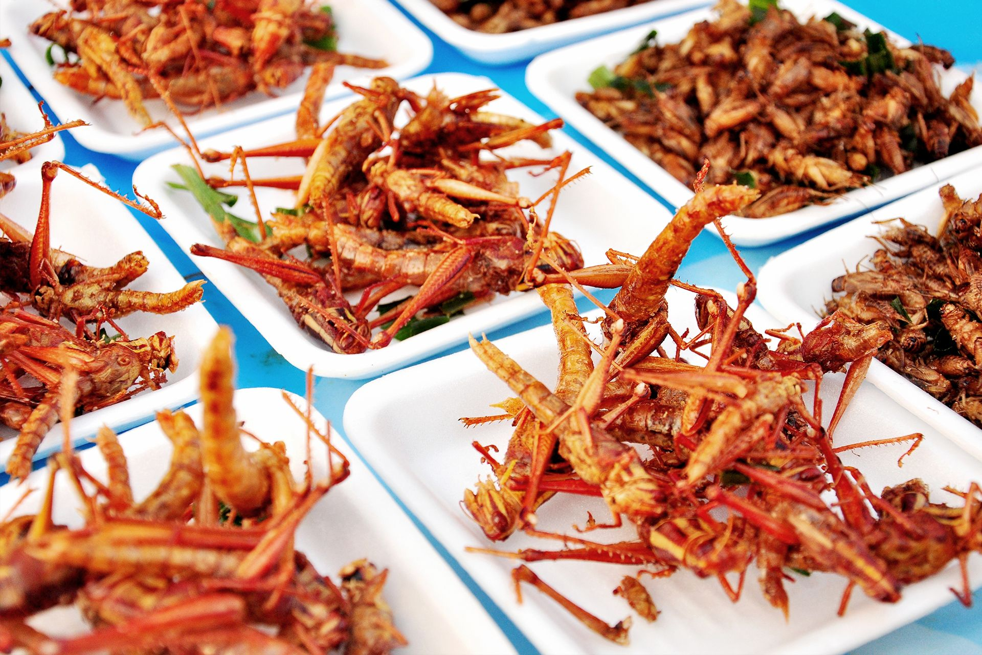 insekten kochkurs ab  knusprige speisen geniessen