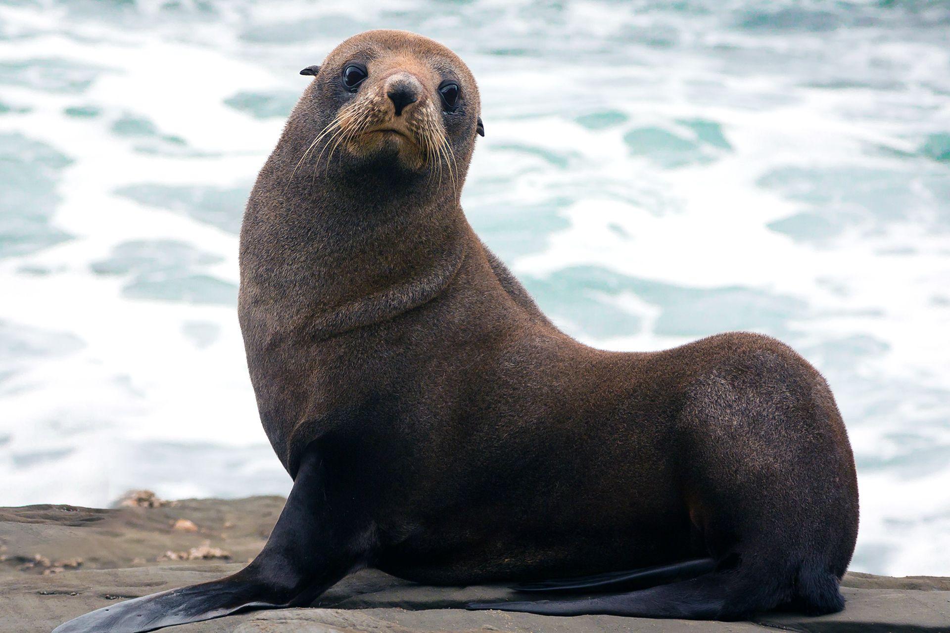 Schwimmen Mit Robben In Rostock Ab 279 Verschenken