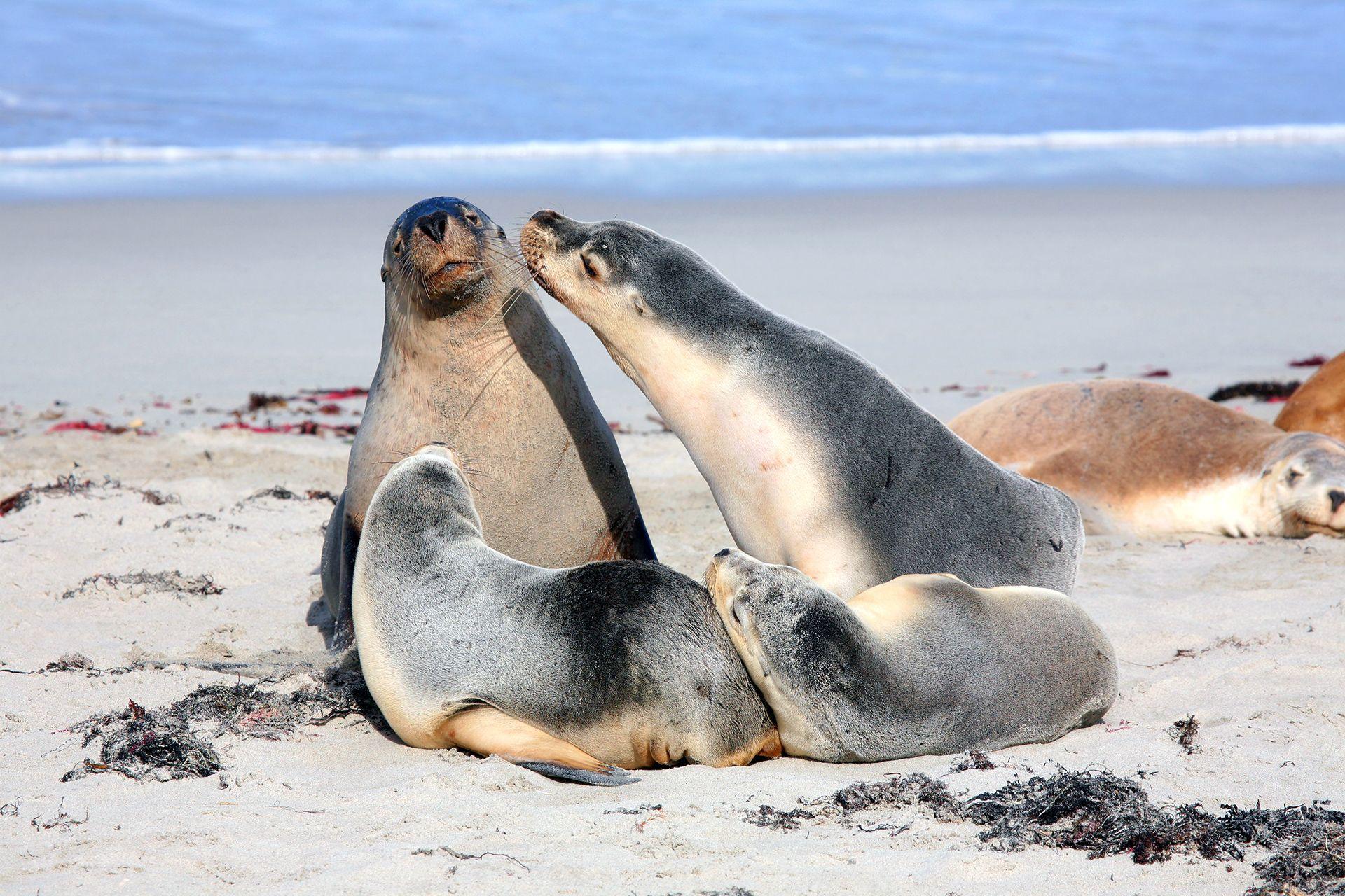 Robben Klobben Exklusives Robbenjagd Erlebnis Buchen